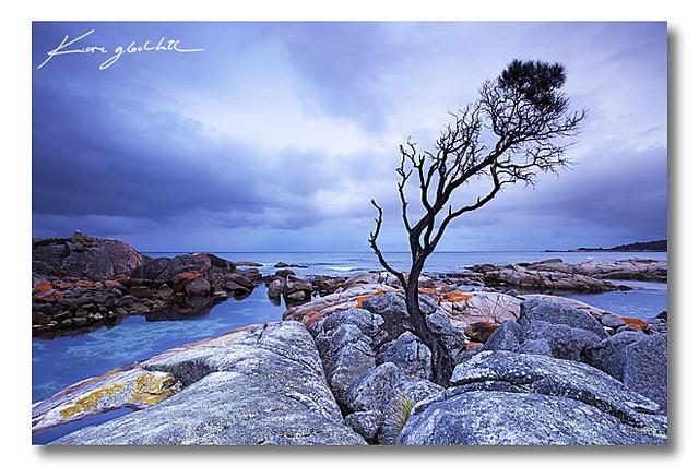 The famous Binalong Bay tree, Bay of Fires, Tasmania