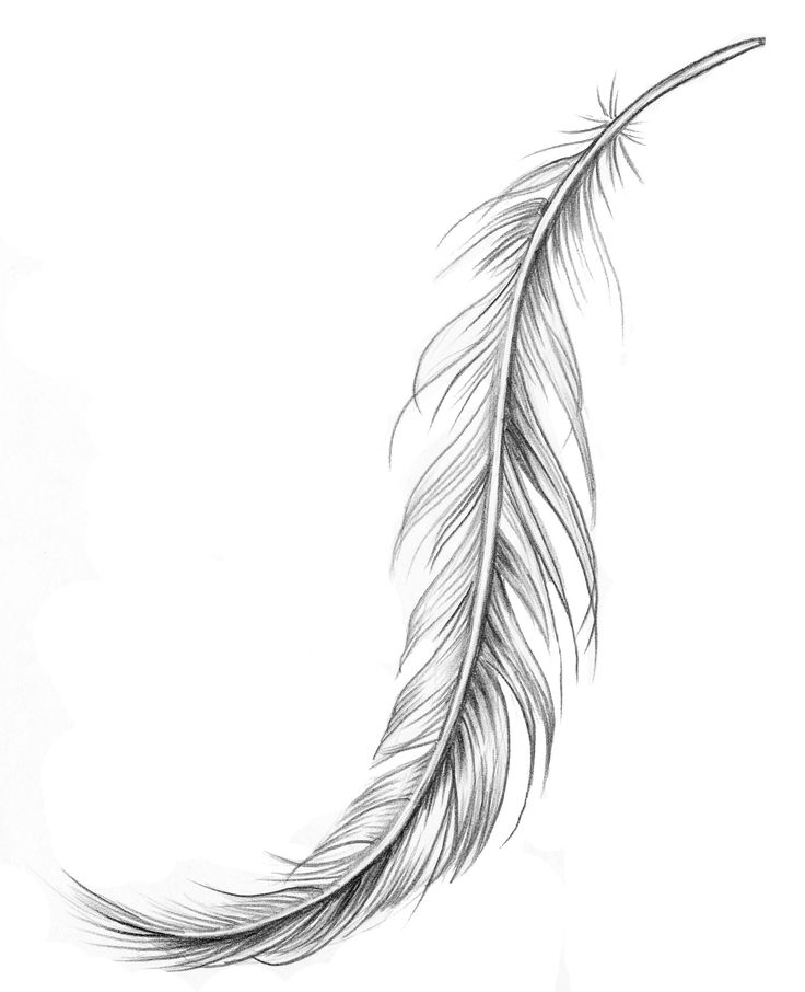 Feather Drawing | Fjäder för placering på underarm.