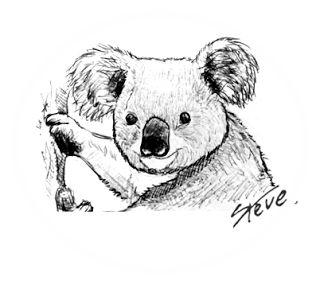 ©®eªRtEmUndOs: Koala