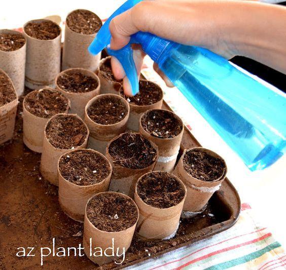 Folosind role de hârtie igienică biodegradabile - o modalitate foarte bună de a începe de semințe în interior și să nu deranjeze rădăcinile!  O dată gata pentru transplant doar planta intreaga rola in sol ... carton voia defalcare.  Fata de gradina :):