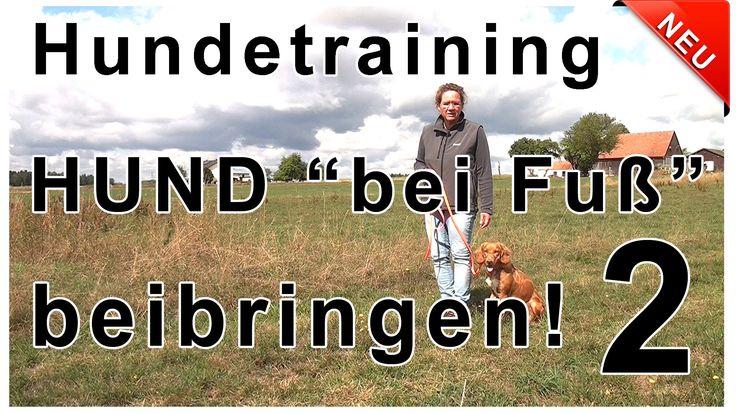 Hund bei Fuß beibringen 2 - Du erfährst, wie du auch deinem älteren Hund...