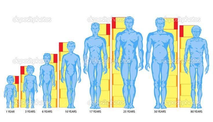 Zvýšení mužské tělo tvary, proporce muže, děti, dospívající, staré, mužské tělo rozvoj - celého těla — Stock obrázek #24112679