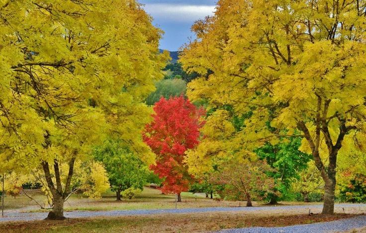 The Mount Lofty Botanic Gardens, Adelaide Hills, SA