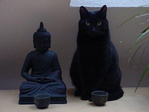 buddha and cat