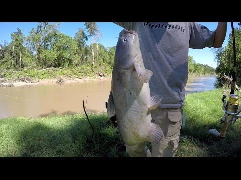 Bank Fishing For Blue Catfish - Fishing For Catfish From The Bank - (More info on: https://1-W-W.COM/fishing/bank-fishing-for-blue-catfish-fishing-for-catfish-from-the-bank/)