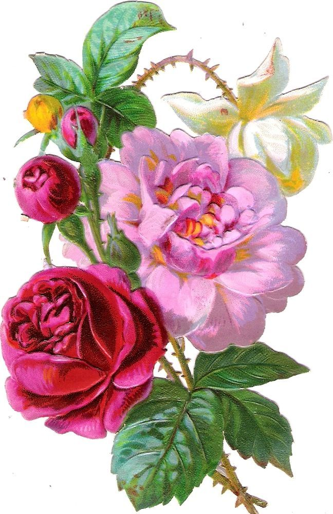 Oblaten Glanzbild scrap die cut chromo Blume  14 cm  flower fleur Rose