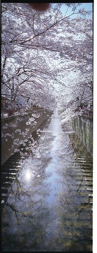 Meguro, Tokyo --  Delicate pink blossoms, interlaced by umber branches, float above for a time, then fall into silver blue water, Spring pleasures...............