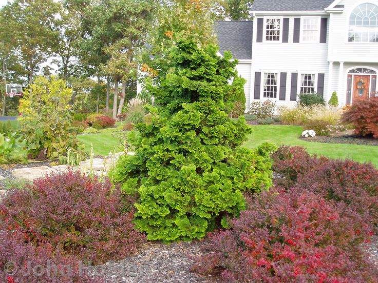 Compact Garden Ideas compact backyard garden ideas small landscaping photo gallery 141 for dogs Compact Hinoki Cypress With Red Barberry Hinoki Cypressoutdoor Landscapingcompactdandelionsgarden Ideasplant