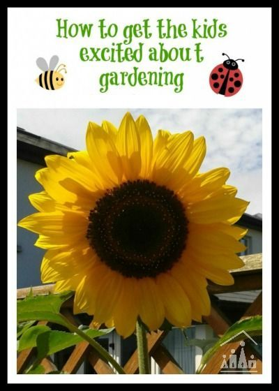 Activities to get kids excited about gardening. Making mini gardens, planting sunflowers and growing cress heads.