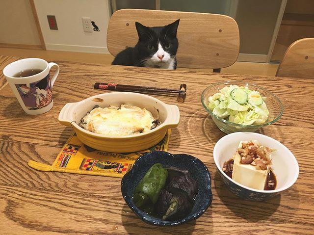 今日は ・鮭のマヨネーズ焼き ・シーザーサラダ ・冷奴 ・茄子とピーマンの煮浸し メインが変わっただけで昨日と変わり映えない食卓。 シーザーサラダは昨日作って好評だったので再び登場。 家に専属のシェフが欲しい。 #猫 #ねこ #cat #ねこ部 #元野良猫 #保護猫 #黒猫 #デブ猫 #愛猫 #日本猫 #はちわれ #クロ #tuxedocat #catstagram #おうちごはん #晩ごはん #ひとりごはん #クロとご飯