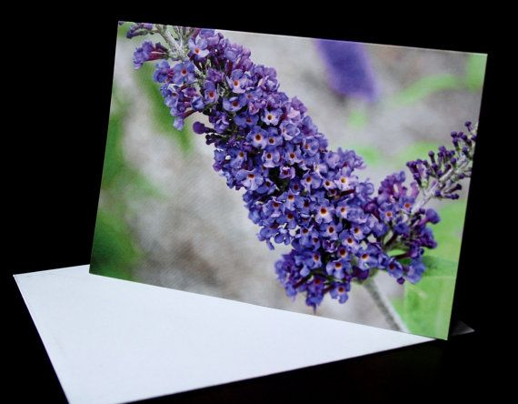 Bright Purple Lilac Flower Card A6 Photo Card Blank by PforPoppy, €2.75