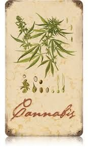 the use of marijuana for various purposes in different cultures throughout history Read origins for more on american current events and history:  permit the sale of various forms of marijuana for medical purposes in the past several months, the .