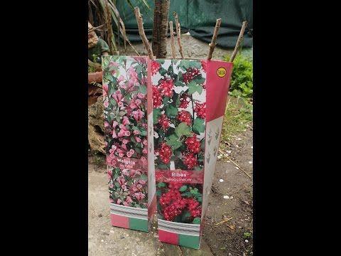Lidl: gli arbusti da fiore e le piante da bacca