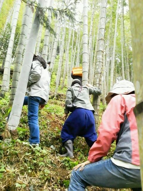 おいしいタケノコが育つよう、山の手入れもしっかりされている。そういう竹山は、とても美しい。