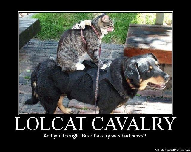 Cat Mate C Canada