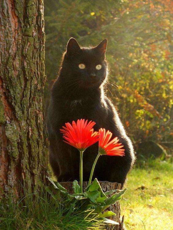 Klicken Sie auf das Foto für mehr bezaubernde und niedliche Katzenvideos und -fotos #cutecats #cats …
