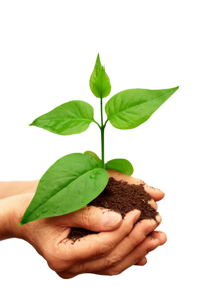 Plant facts science for kids kid and science for 5 facts about soil
