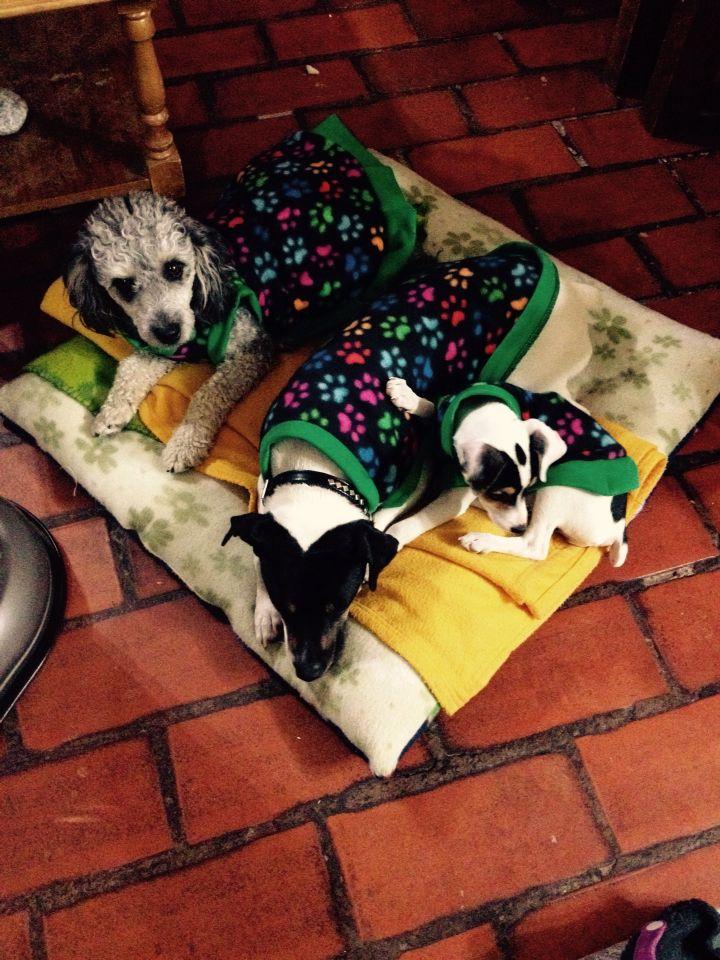 Capas para perros terminados !!