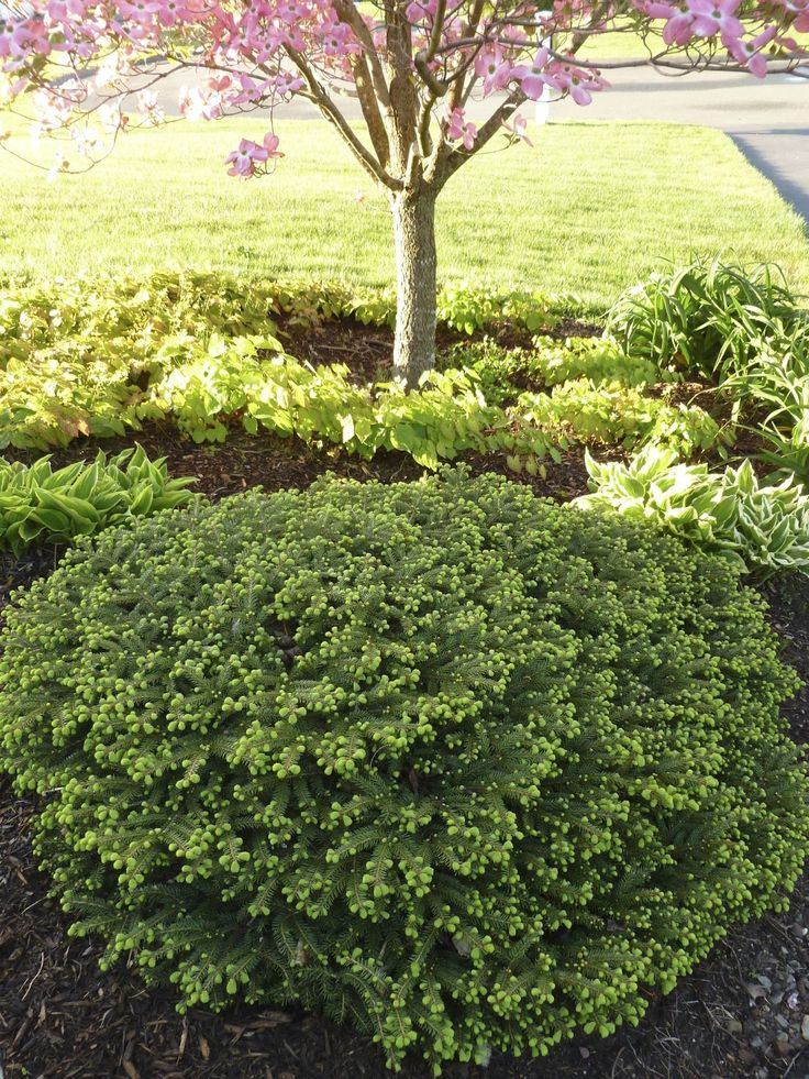 best 25 low maintenance shrubs ideas on pinterest yard