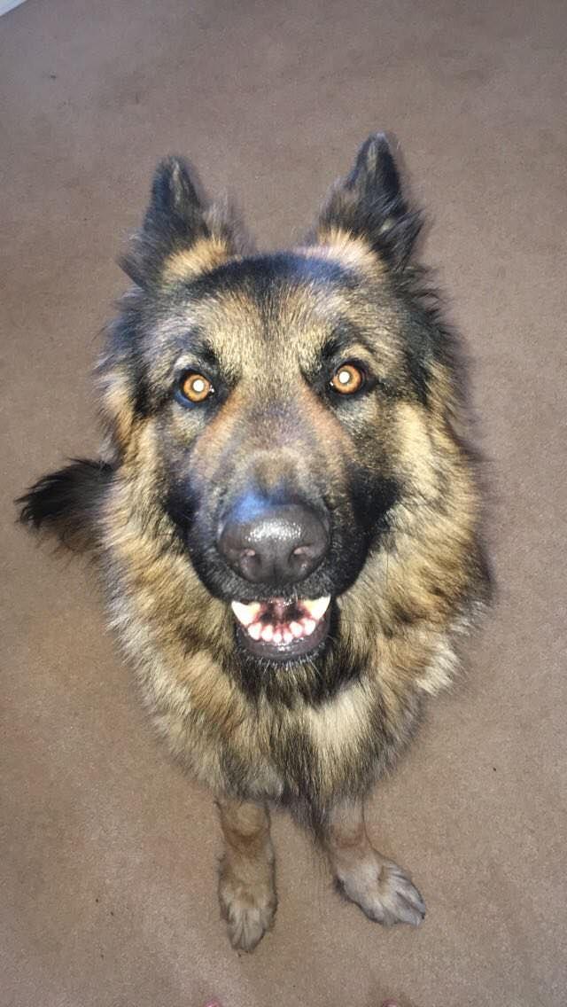 Axle Is A Happy Dog Storyful Dog Best Pinterest Dog Profile