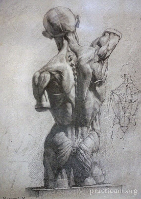 Academic drawing - a classical way to study anatomy