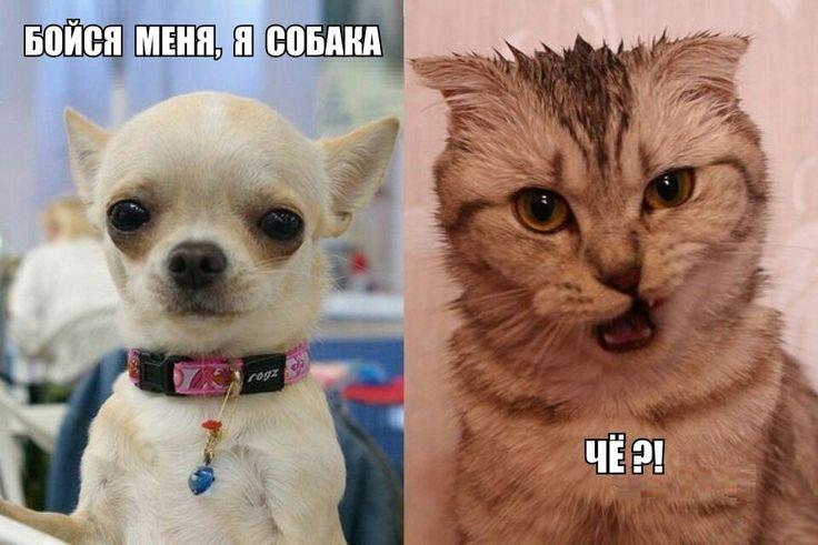 Картинки смешных собак с подписями