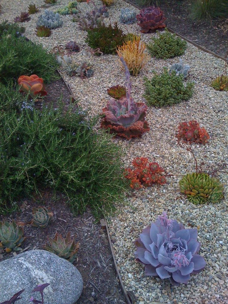 ideas about Drought Resistant Landscaping on