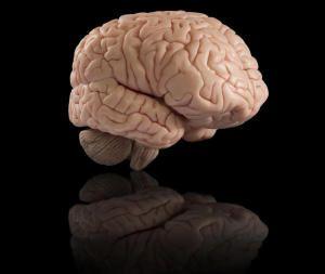 Bigbrain: An ultra-high resolution 3-D roadmap of the human brain
