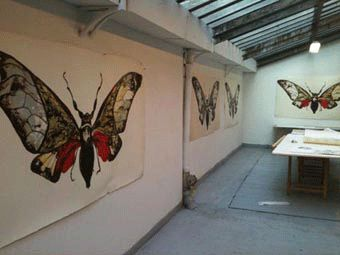 Sarah Graham - Moth transfer seet for  the first litographic pass  | Publicaciones Michael Woolworth2012