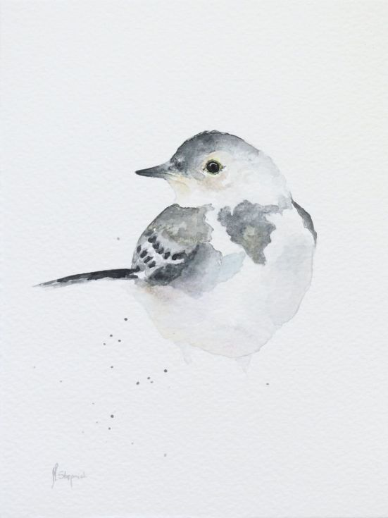 ARTFINDER: Young white wagtail (Motacilla alba) by Malgorzata Stepniak - Young white wagtail (Motacilla alba), original watercolor painting. Please note that colors may be slightly different because of different display settin...