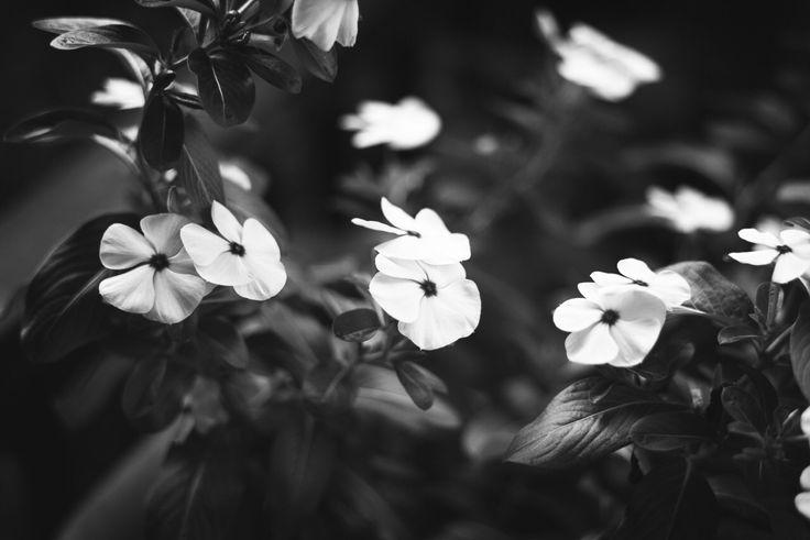 21 besten Blumen schwarz/weiß Bilder auf Pinterest | Blumen ...