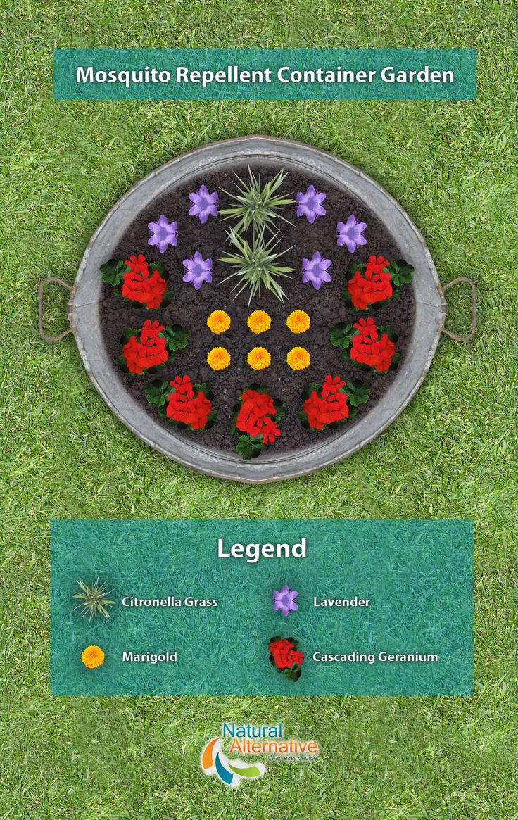 A plan to create your own mosquito repellent container garden using plants such as: citronella grass, lavender, marigolds, and cascading geraniums.   Here's a list of other Mosquito Repellent Plants: http://natural-alternative.com/Tips/2381/Natural-Mosquito-Repellent-Plants  For a 100% all-natural mosquito repellent lawn and garden spray check out our new product: http://natural-alternative.com/Products/Insect-Control/81