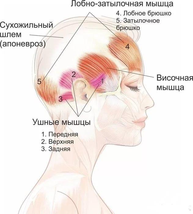 Упражнение «Шлем»: эффективная подтяжка лица без скальпеля! |