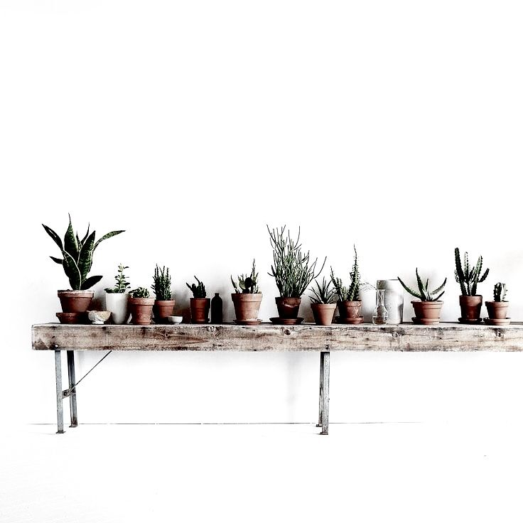 A simple garden for all to see. Low style and beautiful cacti. The more the merrier!