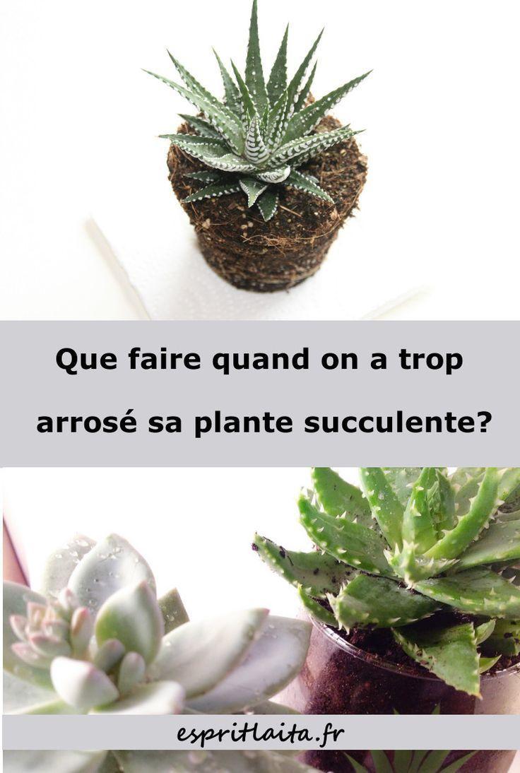 Epingle Sur Belles Plantes