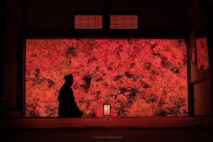 "「Red window」 ・ Location:兵庫(Hyogo JAPAN🇯🇵) ・ Doudan azalea became full bloomed by ""Ankokuji"" in Hyogo prefecture. It looks like a picture as seen from the room. ・ 兵庫県豊岡市の安国寺より。今年も満開となったドウダンツツジは雨に打たれ艶を増し赤の世界を作りだしました。3年通ってやっと住職様撮れました😭 ・ ・ #igersjp #japanawaits #instagramjapan #dairy_photo_jpn #ig_japan #Lovers_Nippon #icu_japan #japan_of_insta #team_jp_ #bestjapanpics #東京カメラ部 #tokyocameraclub #wu_japan #photo_shorttrip #ptk_japan #art_of_japan_ #phos_japan #kf_gallery_vip #ig_japangram…"