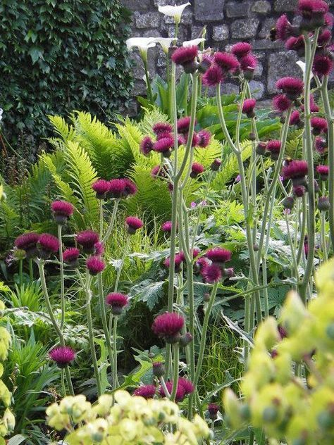 Lime greens and purples - Ferns and cirsium