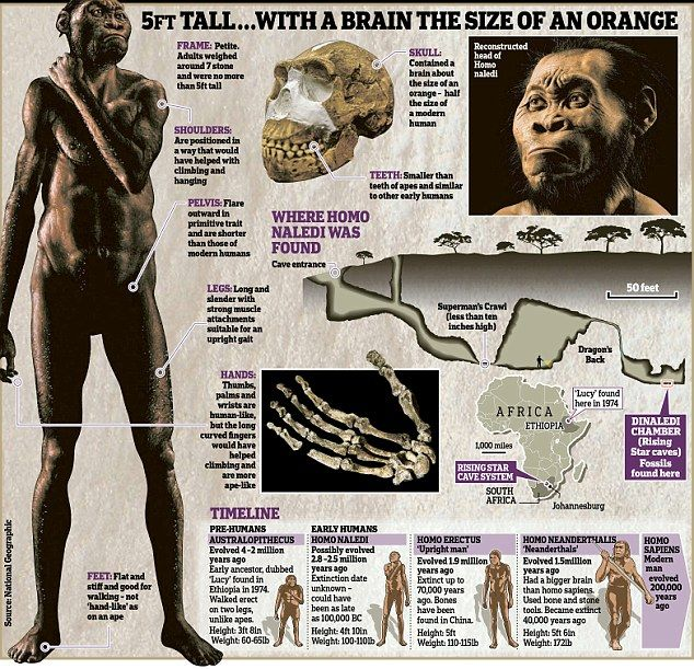 Is this the first human? Extraordinary find in a South African cave suggests man may be up to 2.8million years old   Daily Mail Online