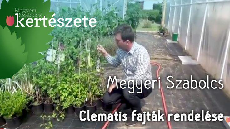 A videóban látható növény itt vásárolható meg: http://www.megyeriszabolcskerteszete.hu/kuszokapaszkodo_novenyek/iszalag_fajtak ------------------------------...