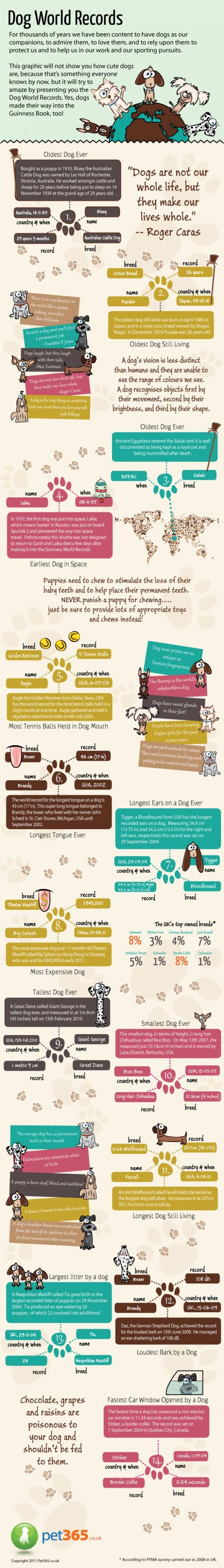 Dog World Records - Infographic