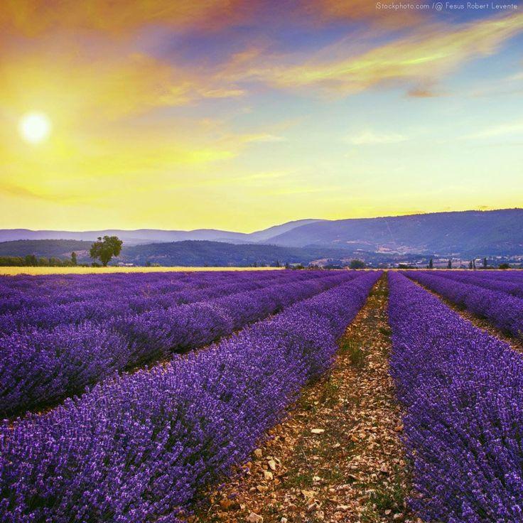 Une petite bouffée estivale en Provence au cœur de l'hiver !