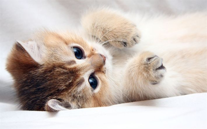 Download wallpapers small kitten, bed, beige cat, cute animals, pets
