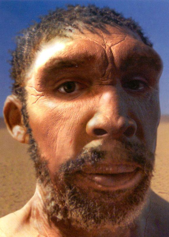 EL HOMO RHODESIENSIS: Hombre de Rhodesia u Homo Rhodesiensis. Este es nuestro antepasado directo y está, evolutivamente hablando, más cerca de nosotros que el Homo neanderthalensis.Apareció hace 650.000 años y desapareció hace aproximadamente 150.000 años y su característica más destacada es que tenía la misma capacidad craneal que la del homo sapiens actual.