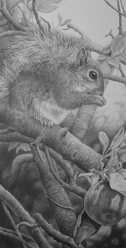 Julie Rhodes, original wildlife art, wildlife pencil drawings, wildlife prints, animal drawings, animal art, Marwell, NEWA, wildlife art exhibitions, willdife artists, Drawings of tigers, lions, zebras, penguins, cheetahs, orangutans, snow leopards, squirrels, foxes