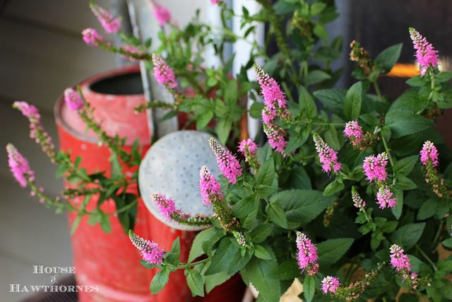 100 ideas to try about flowers gardens containers for Low maintenance full sun flowers