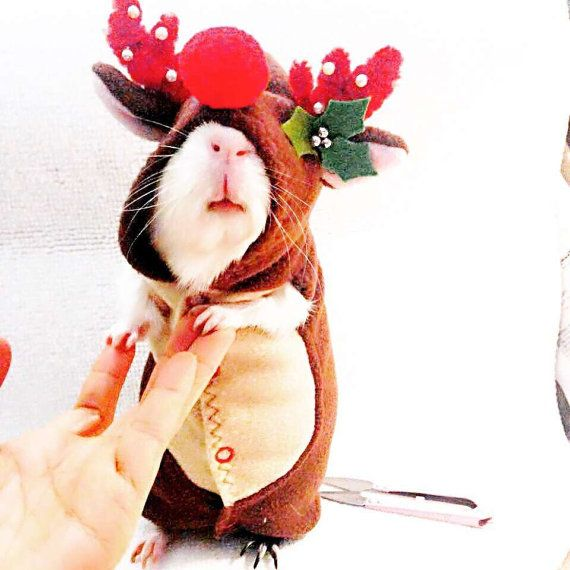 Guinea Pig Costume  Christmas Reindeer Costume  by Crafted4Pets
