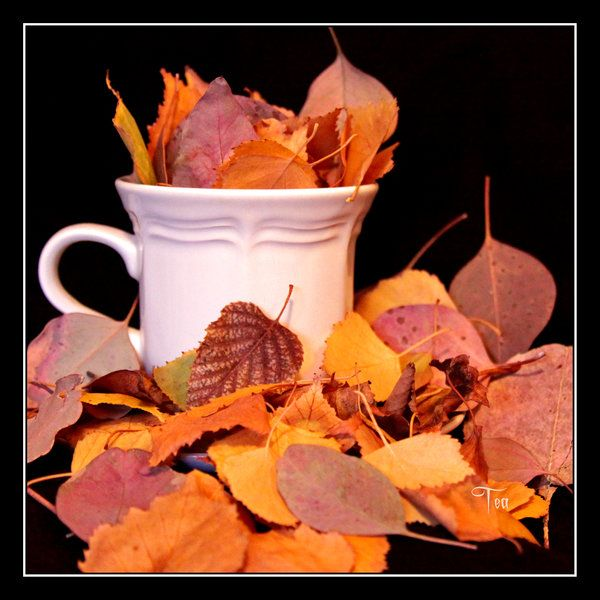 Autumn is a time for thinking upon what is abundant in our own lives. For this photo project, I also made it into an exercise of thanksgiving. For each leaf that I fit inside the teacup, [approxima...