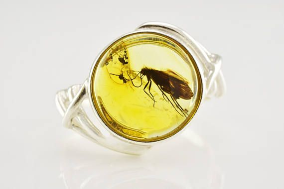 Personalized Natural LARGE MOTH Insect Baltic Amber Sterling