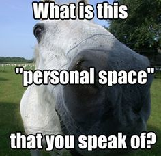 What personal space? #horse #humor #funny