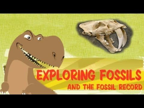 Exploring Fossil Records, How Fossils Are Formed, Interesting & Educational Videos for Kids - YouTube